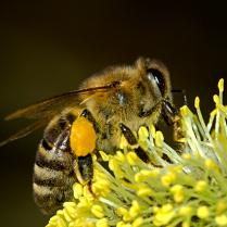 Bienenpower